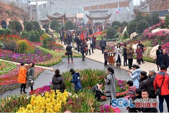 成都:春节大假 6万余游客花舞人间赏花