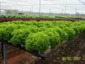 轻型屋顶绿化无土栽培种植技术