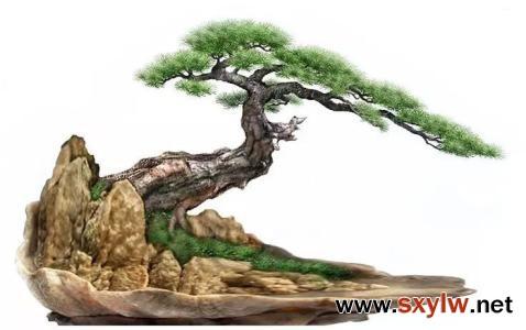 松树拿弯时的注意事项和要求