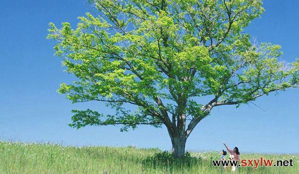 园林植物栽培养护基础知