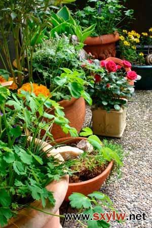 一年生植物和多年生植物