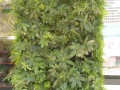 植物墙 (6)