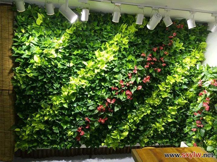 墙体绿化-- 园林编辑