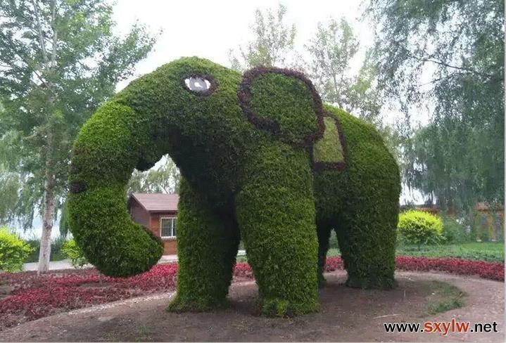 绿雕-- 园林网编辑