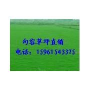 句容绿馨草坪苗木种植有限公司