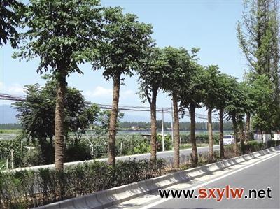 大绿化大景观大发展 西安打造绿色花园之城宜居宜业之城
