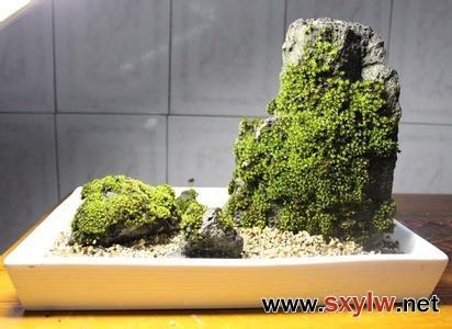 园林设计中让假山石长出青苔的制作方法