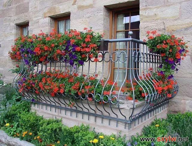 在阳台养花就得这样,阳台变花园,等花一开,全楼都羡慕你