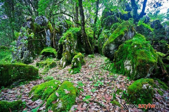 """罕见!贵州发现国内面积最大的绿石林,被称为""""神仙的居所""""!"""