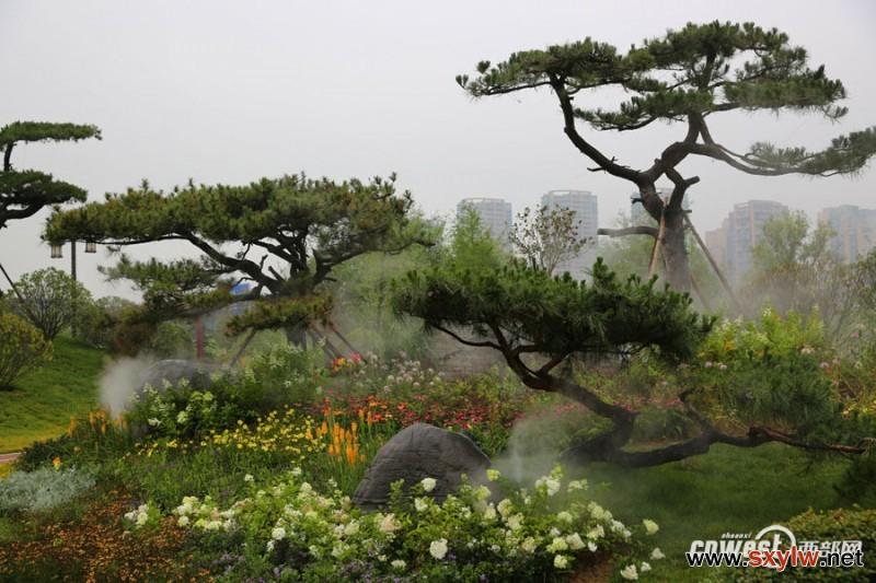 西安人造雾扮靓曲江池西路 街头小景似仙境
