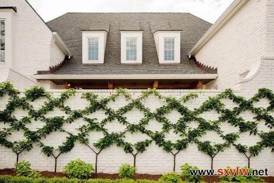 超有艺术感的树墙