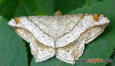 八九月份园林养护高危虫害防治