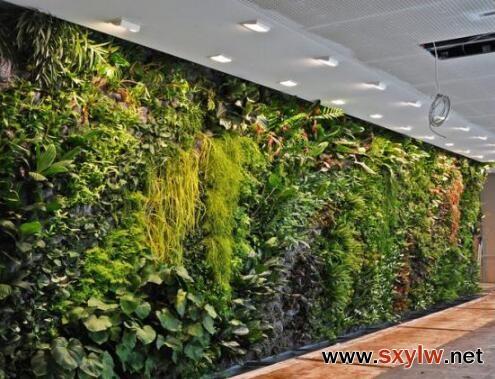 植物墙在城市中的应用