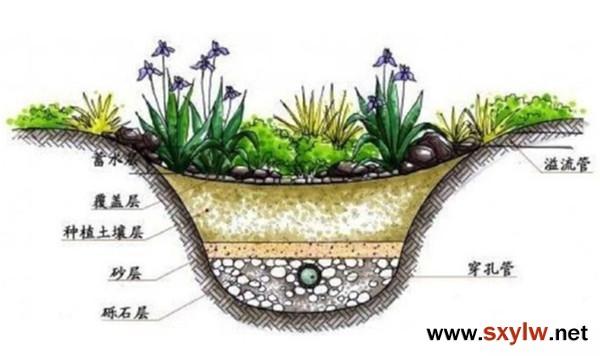 """雨水花园""""颜值和实力并行的绿地景观"""