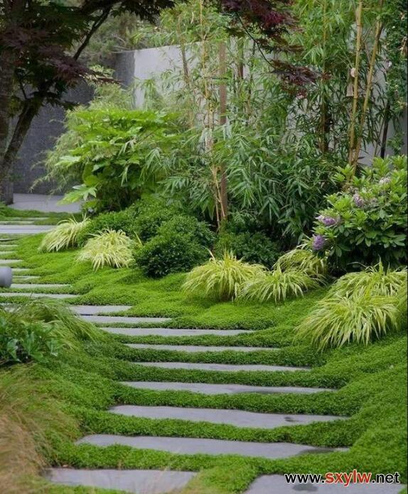 别墅庭院风水——道路、植物