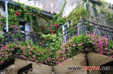 阳台立体栽植