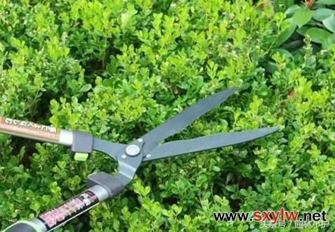 园林花灌木修剪技术要点