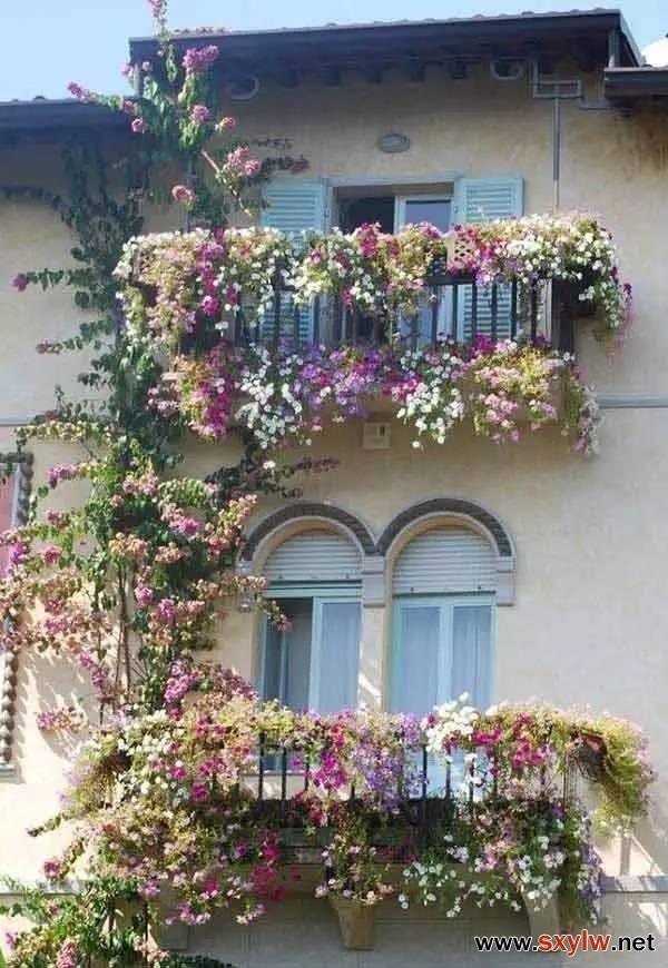盛开的阳台 · 阳台种花23例