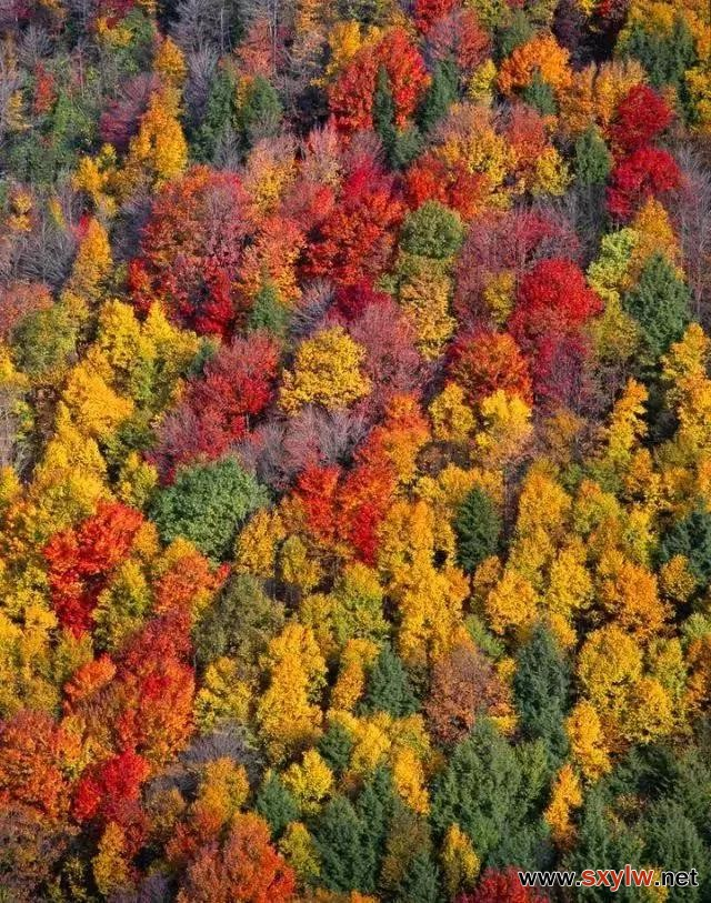 合理运用色叶树,展现园林的色彩美