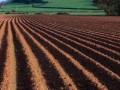 播种前的土壤杀虫杀菌,详细方法
