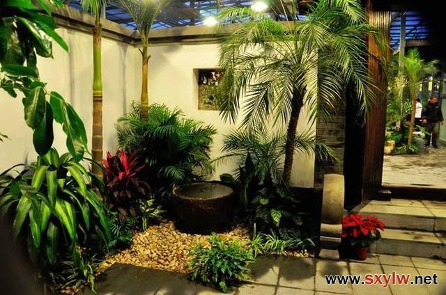小庭院设计植物搭配技巧解析