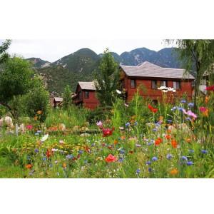 多年生野花组合种子草花花卉种籽四季播种开花