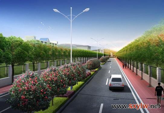 城市道路绿化中行道树种植设计形式