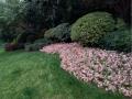 庭院景观 (29)