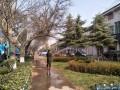 早春园林植物如何浇灌返青水